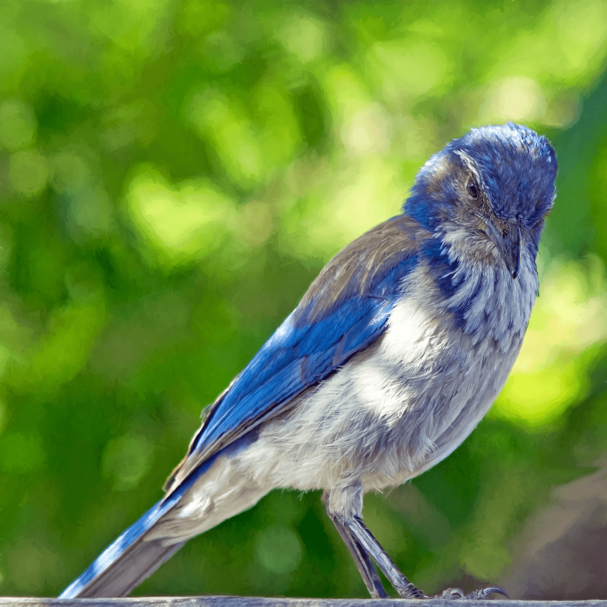 Lessons Taught by Blue Birds
