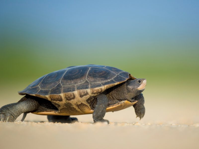 8 Ways That Slow and Steady Wins the Race